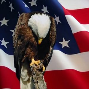 AmericanEagle_6_zps0d975c2c